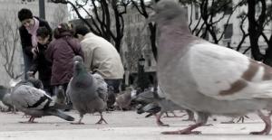 /Na praça...