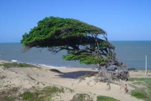 /Árvores do Amor