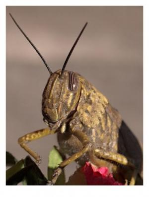/Vida de insecto