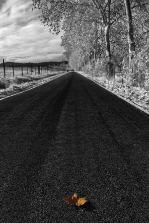 /Infrared road
