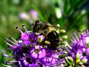 Macro/A última macro de insectos