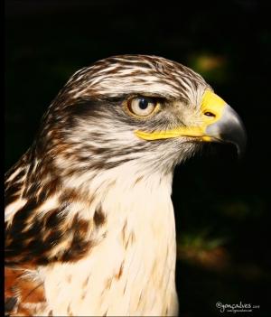 /.:: Eagle ::.