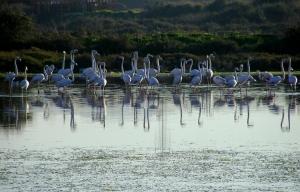 Animais/Flamingos em...
