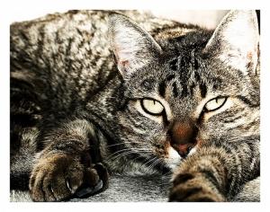 /Lazy Cat