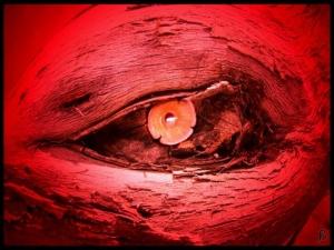 /{ Eye }