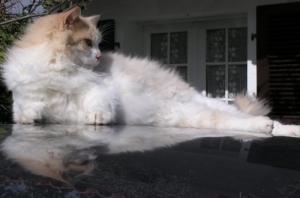 /Vida de Gato