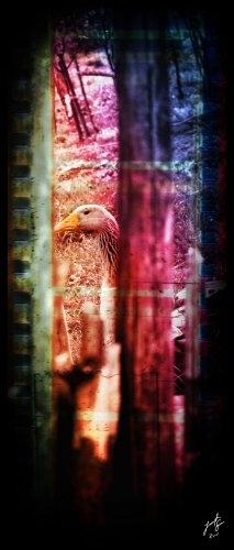 Arte Digital/filme do ganso