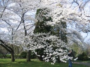 /Primavera 2005