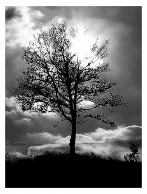 Gentes e Locais/Toscana Tree...