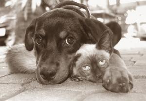 Animais/É isso aí, amizade!!!