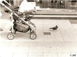 Animais/pombinha moderna