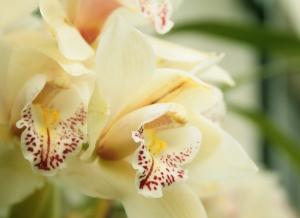 Macro/mais orquídeas...mais primavera