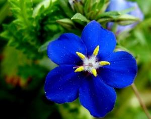 Macro/azuis