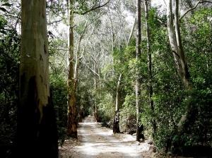 Paisagem Natural/Dia Mundial da árvore