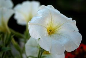 Macro/mais flores... :)