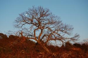 Paisagem Natural/Segurando a lua