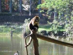 Animais/Monkey