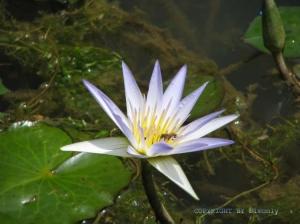 Paisagem Natural/Ele subiu para apreciar a flor...