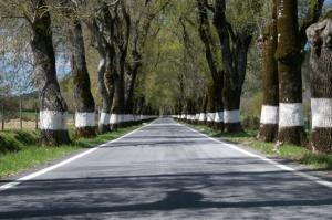 Paisagem Natural/As nossas estradas