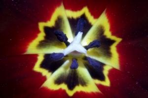 Macro/Hexagonal Nature