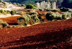 Paisagem Natural/Vale junto a Santiago do Cacém