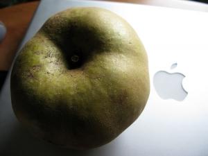 Outros/Dois tipos de maçã