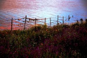 Paisagem Natural/Barragem do Alqueva_03