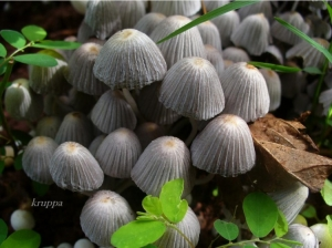 Macro/Cogumelos delicados