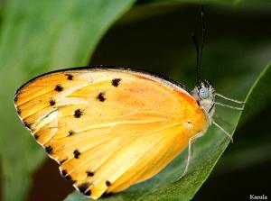 Macro/Queria ser borboleta....