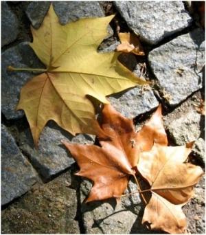 /As cores do Outono