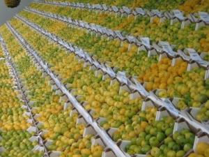 /Tanto limão !!!!!