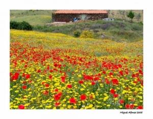 Paisagem Natural/Campo natural