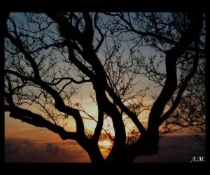/Por do sol VIII