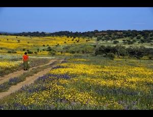 """Paisagem Natural/""""Pelos campos floridos..."""""""
