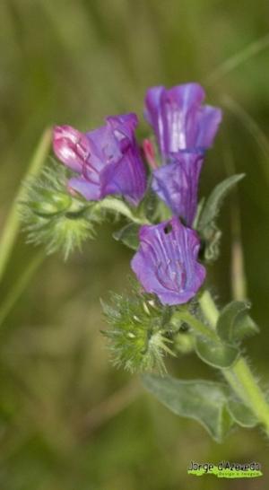 Paisagem Natural/purple