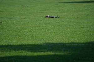 Outros/Peckham Rye Park