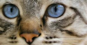 /LITTLE CAT....GREAT SOUL