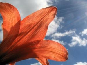 /Raios de sol na flor vermelha