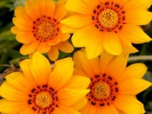 /Amarelo