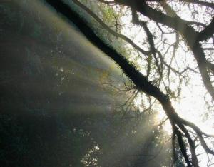 /Árvore e Luz