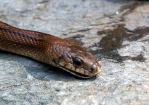 /Snake