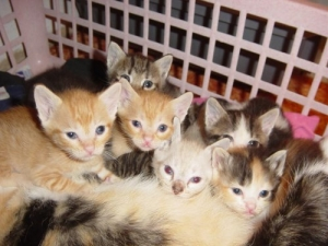 Outros/Gatinhos curiosos