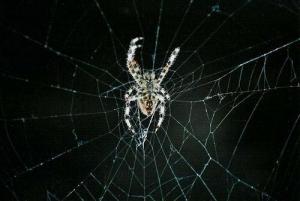 /Aranha no quintal