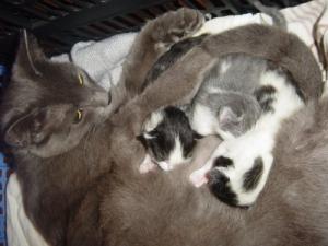 Outros/E a gatinha Euphrasia é mãe!