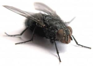 /uma mosca