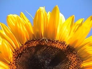/uma abelha