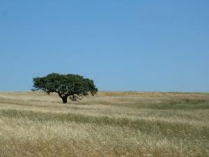 Paisagem Natural/Árvores do Alentejo