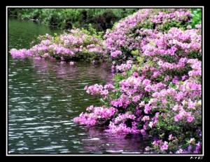 Outros/Avalanche em Flor!!!