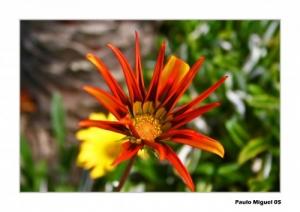 Outros/Flor do liz