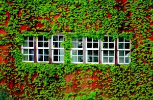 Paisagem Urbana/janelas ..